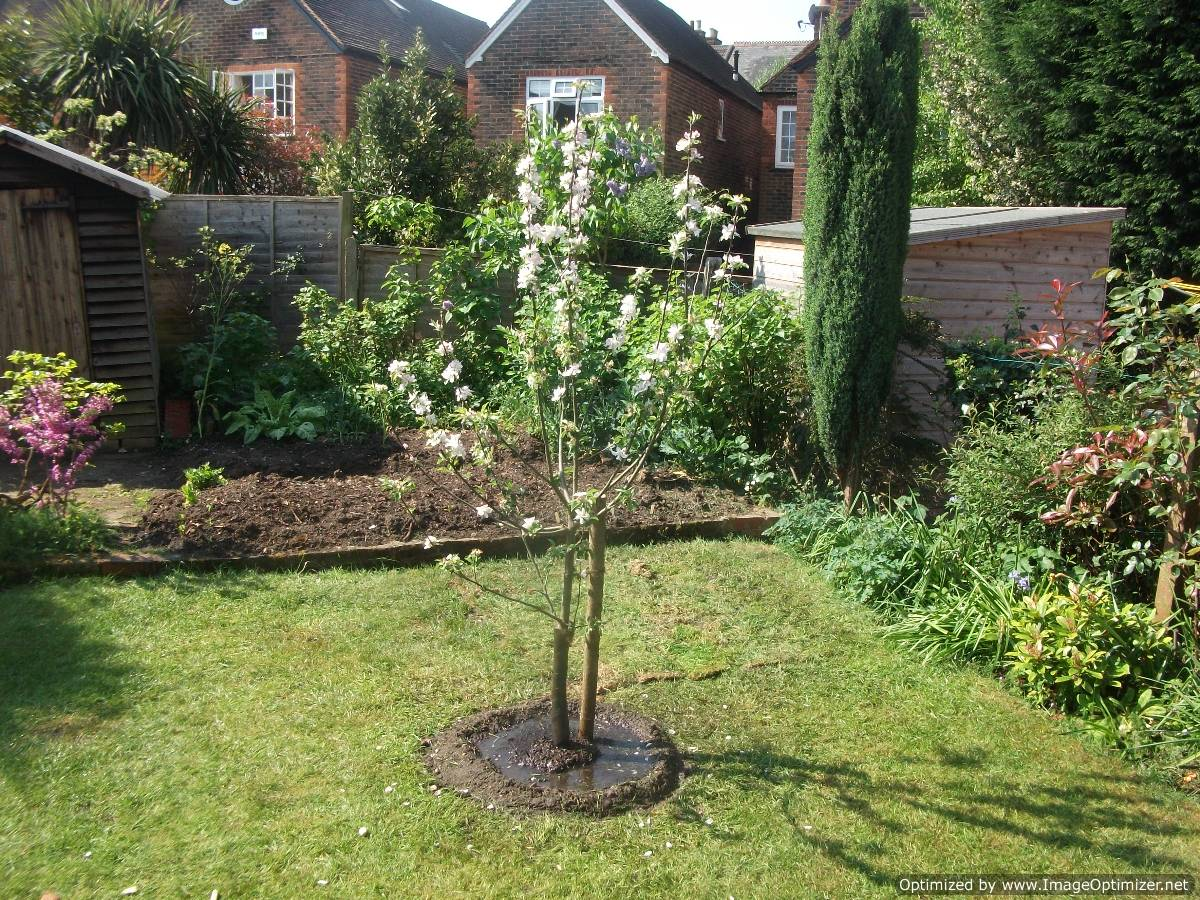 pěstování ovocných stromků 2. část