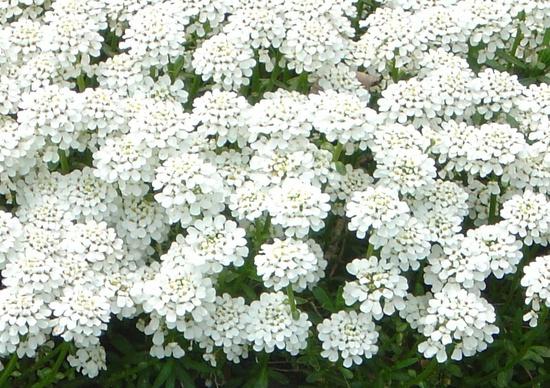 umělé květiny fotografie